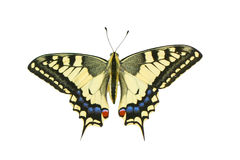 Butterfly. Big butterfly in white background Royalty Free Stock Photo