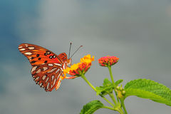 Free Butterfly Royalty Free Stock Photography - 18890877