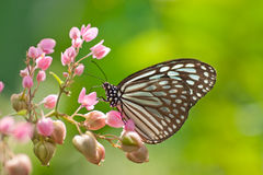 Butterfly. A butterfly in the park stopped on top of flowers Stock Photos