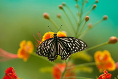 Butterfly. A butterfly in the park stopped on top of flowers Stock Photography