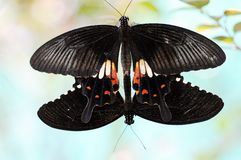 Butterfly. A butterfly doing what they do Royalty Free Stock Photography