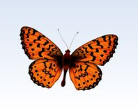 Butterfly 2 Royalty Free Stock Photos