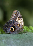 Butterfly. The butterfly has a rest on a tree trunk Royalty Free Stock Images