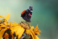 Butterfly. On a yellow flower in late summer Royalty Free Stock Photography