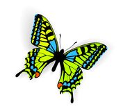 Butterfly. Color Butterfly Illustration with shadow Royalty Free Stock Photo