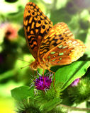 Butterfly. A butterfly in nature sitting on top of a flower Stock Photo