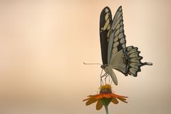 Butterfly. On flower Royalty Free Stock Photos