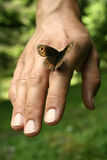 Butterfly. A butterfly standing on a hand Stock Photography