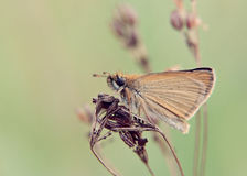 Butterfly. Natural background with brown butterfly Royalty Free Stock Photography