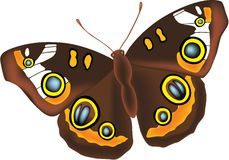 Butterfly. Full detailed brown vector butterfly royalty free illustration