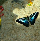 Butterfly. The shadow of a child studying butterfly on the sidewalk Royalty Free Stock Photography