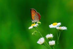 Free Butterfly Stock Photography - 21851562