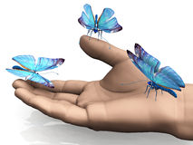 The butterfly Stock Photo