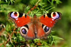 Butterfly. In Grass Royalty Free Stock Images