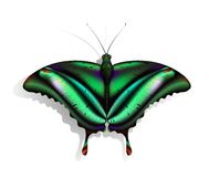 Butterfly. The beautiful green butterfly with red and purple marks Stock Photos