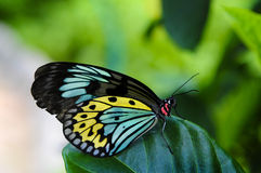 Butterfly. Picture of a colorful butterfly on a leaf Stock Image