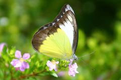 Free Butterfly Royalty Free Stock Photos - 235078