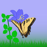 Butterfly. Sitting on blue flower Stock Photography