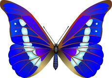 Butterfly. Tropical butterfly vector illustration