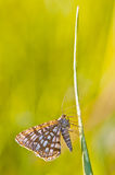 Butterfly Royalty Free Stock Photo