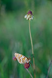 Butterfly. A beautiful butterfly resting in the grass Royalty Free Stock Photography