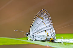 Butterfly. Royalty Free Stock Photos