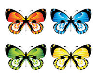 Butterfly. Vector illustration - Brightly coloured butterfly Stock Photos