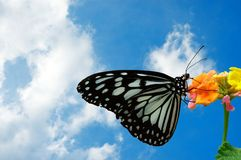 Free Butterfly Royalty Free Stock Photos - 258158