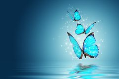 Butterfly. Blue Magic butterfly over water Stock Image