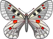 Butterfly. Parnassius butterfly royalty free illustration