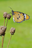 Butterfly. And flower at garden Stock Photo