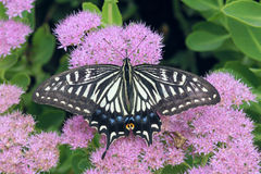 Free Butterfly Stock Images - 26556134