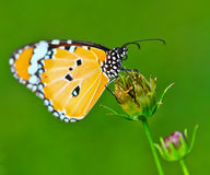 Butterfly. And flower at garden Stock Photos