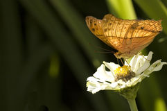 Butterfly. Photo of butterfly with natural background stock images