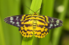 Butterfly. A photo of butterfly with natural background royalty free stock photo