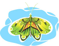 Butterfly. Beautiful  butterfly Spreading its wings Stock Image