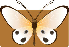 Butterfly. Beautiful  butterfly Spreading its wings Royalty Free Stock Photos