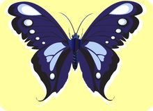 Butterfly. Beautiful  butterfly Spreading its wings Royalty Free Stock Images