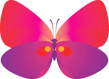 Butterfly. Beautiful  butterfly Spreading its wings Royalty Free Stock Image