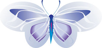 Butterfly. Beautiful  butterfly Spreading its wings Stock Photography