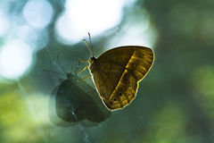 Free Butterfly Stock Photos - 27887323