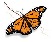 Butterfly. A monarch butterfly resting on a sprig Royalty Free Stock Photos