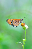 Butterfly. Spotted butterfly stay on green leaf stock image