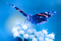 Butterfly. Gathering pollen on flower in summer stock image