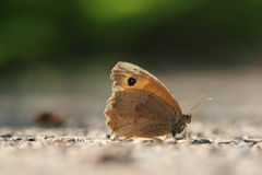 Butterfly. A butterfly on the ground Royalty Free Stock Photos