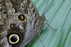 Butterfly 3 Royalty Free Stock Images