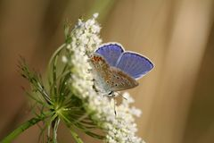 Butterfly #3 Royalty Free Stock Photo