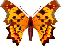 Butterfly. On white background stock illustration