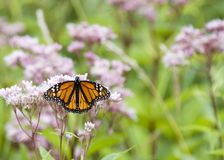 Free Butterfly Stock Photography - 3022902