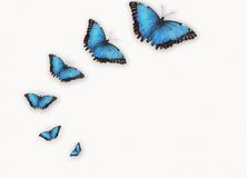 Free Butterfly Stock Images - 3147254